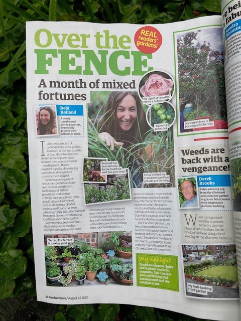 My August garden article in 'Over the Fence' Garden News magazine