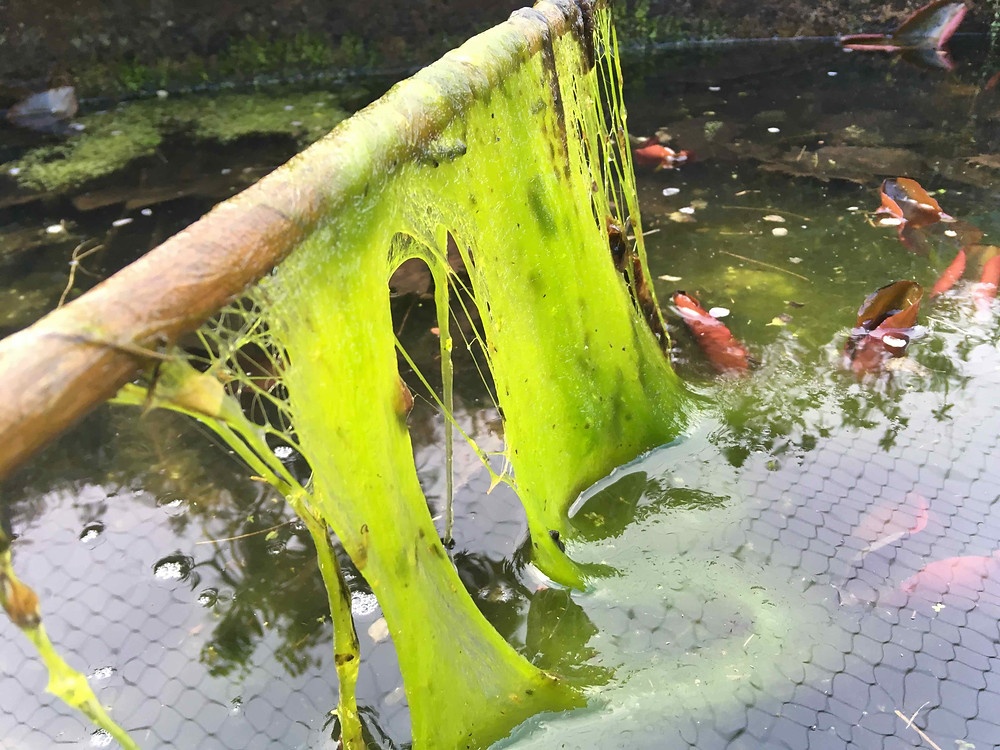 Remove excessive pond weed carefully
