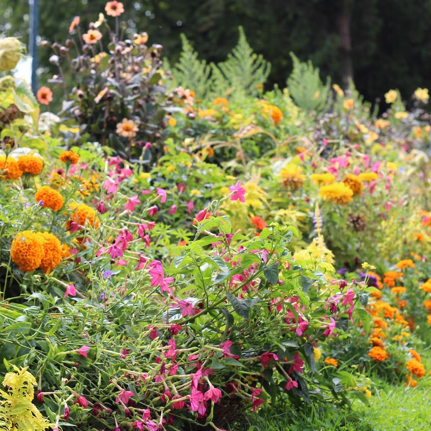 A kaleidoscope of plants & colour