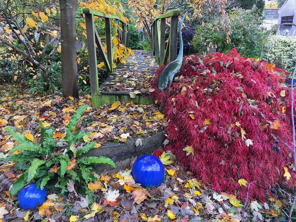 November garden full of colour