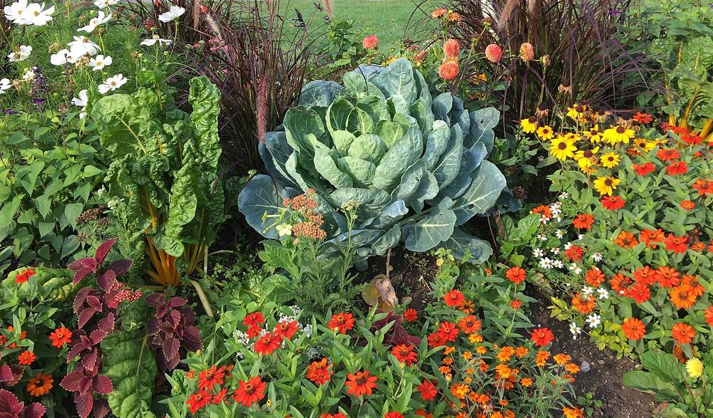 Vegetables grown in between flowers in a border