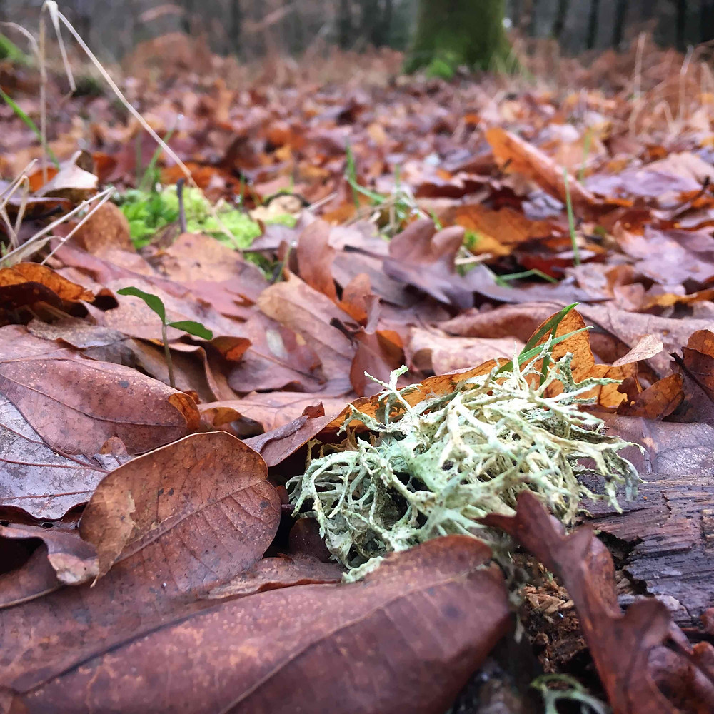 Explore outdoors. Blow the cobwebs away with a woodland walk