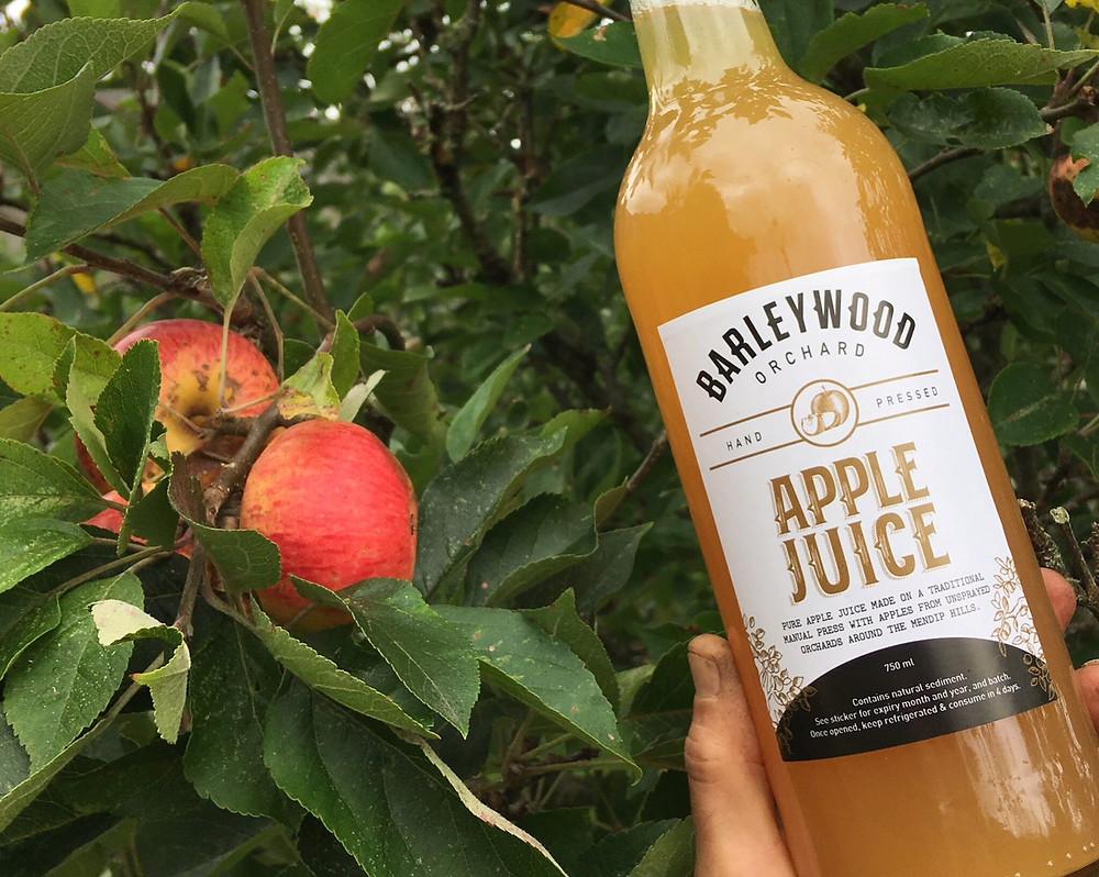 Harvest apples for juicing