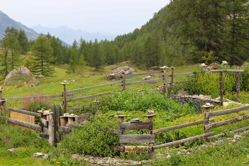 Extreme gardening - allotment at altitude