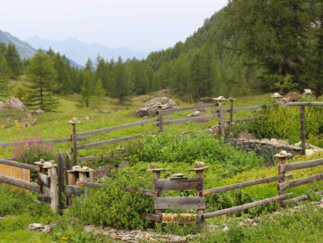 Extreme Gardening Le Monal