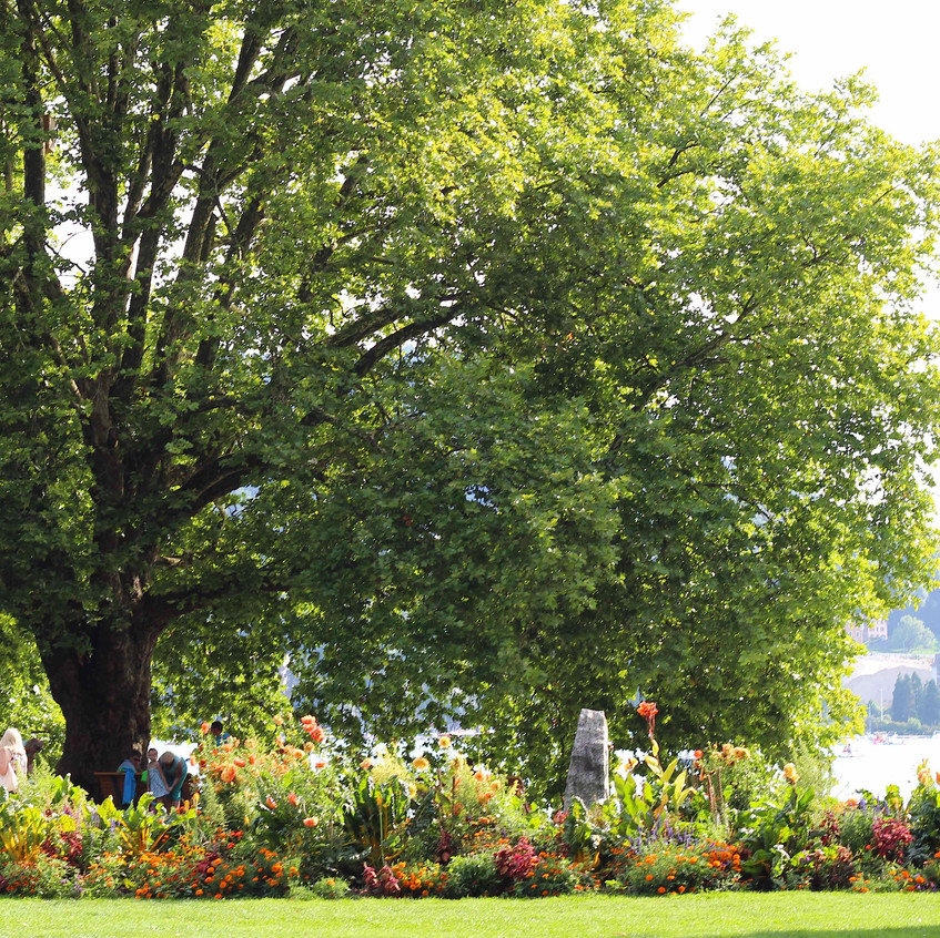 Arboretum style park & flowerbeds