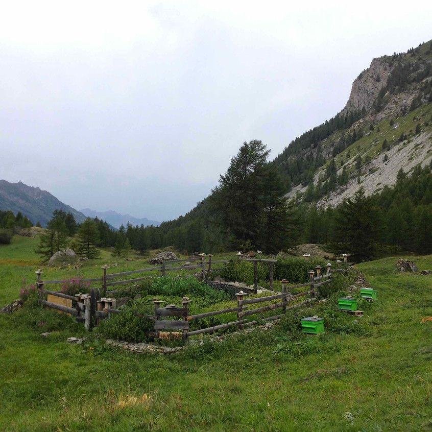 Le Monal allotmenteering alpine-style