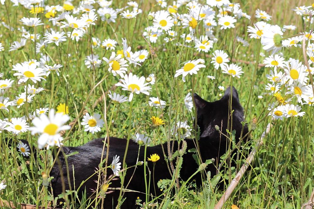 Fred enjoying the daisy lawn