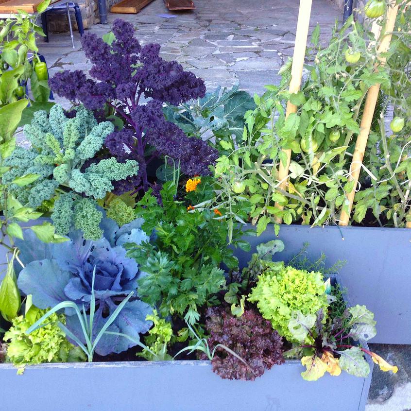 Salad & veg planters