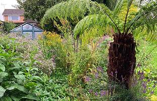 Tree fern jungle.jpeg
