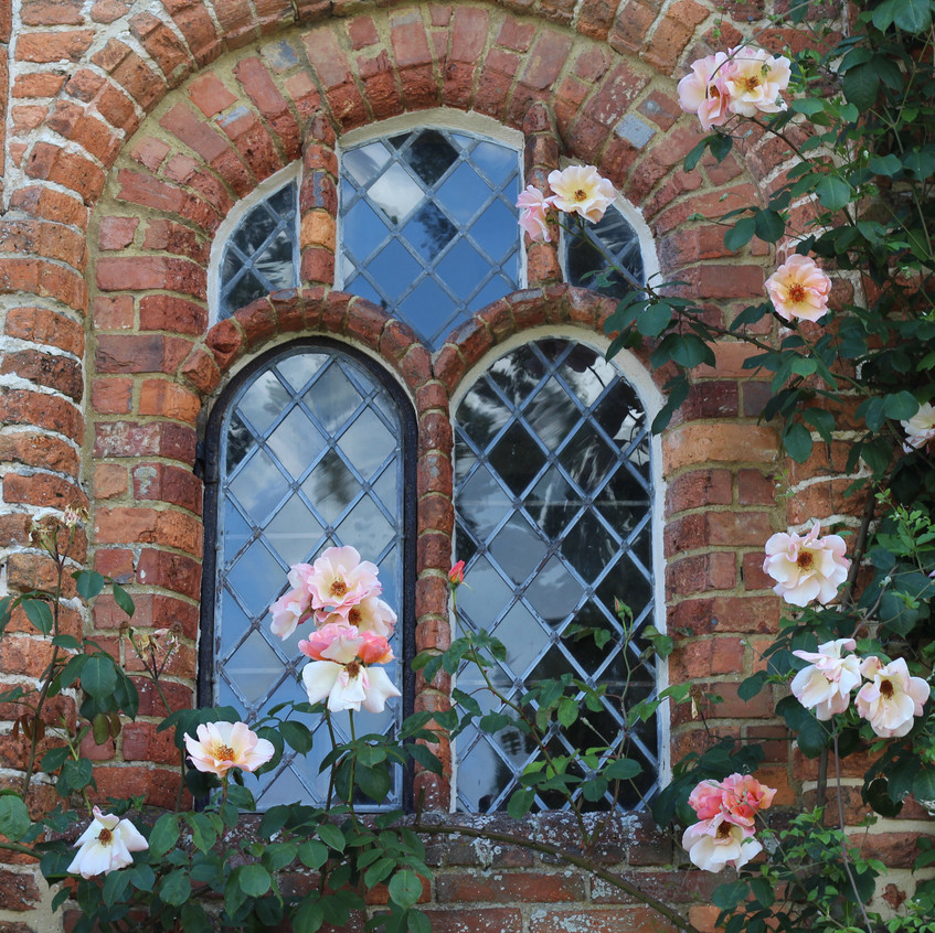 Roses climbing round window