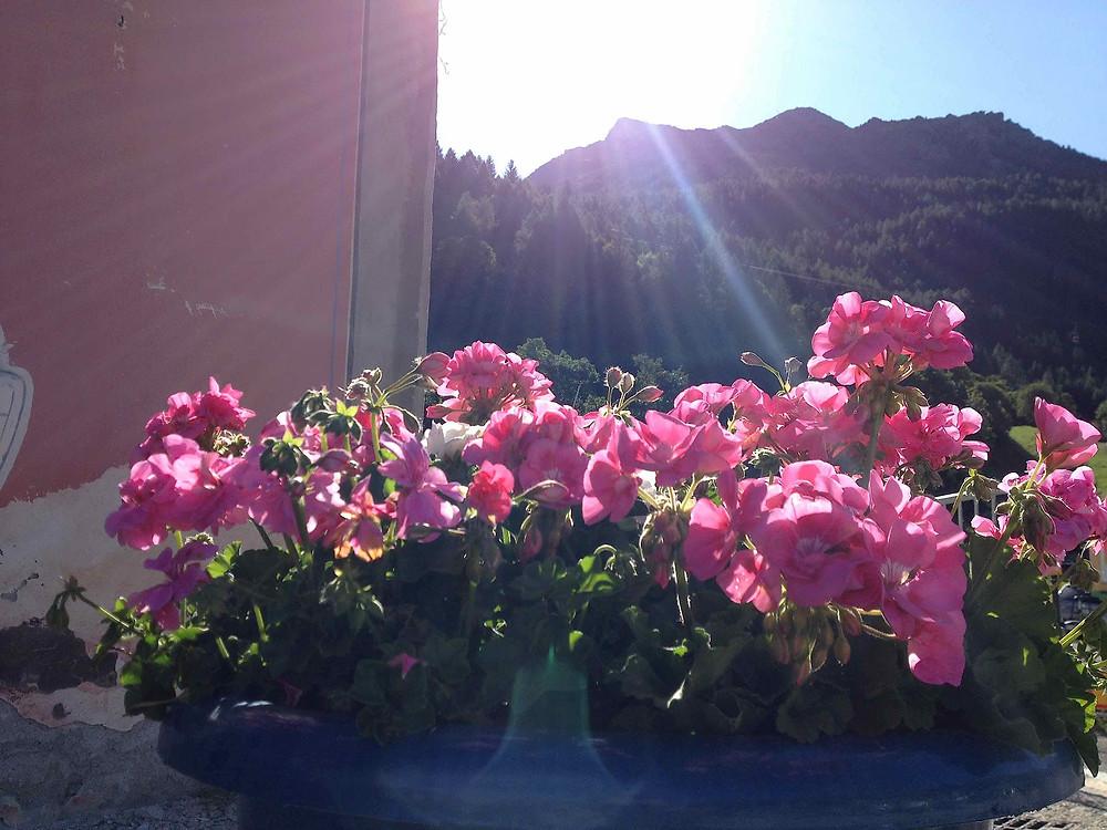 Sun rise at Sainte Foy bathing geraniums in light