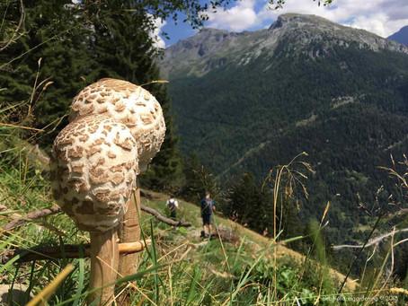 Finding Fungi