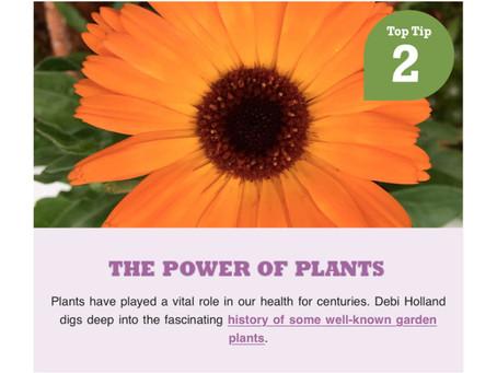 Richard Jackson Garden The Power of Plants