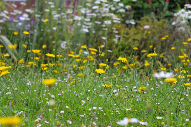 Reduce mowing your lawn, let the wildflowers grow