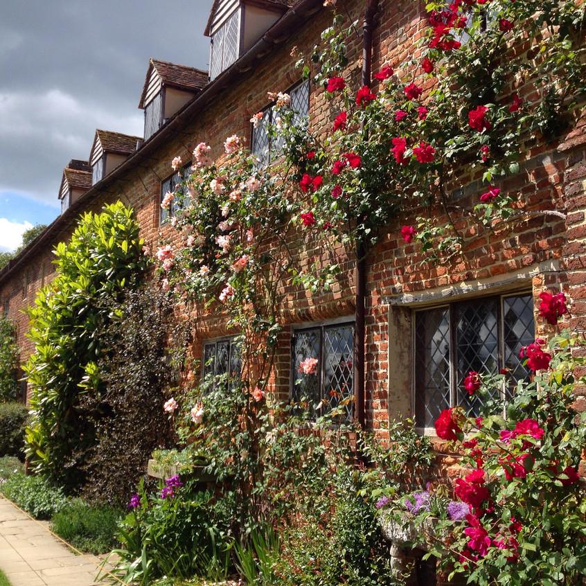 Fabulous climbing roses