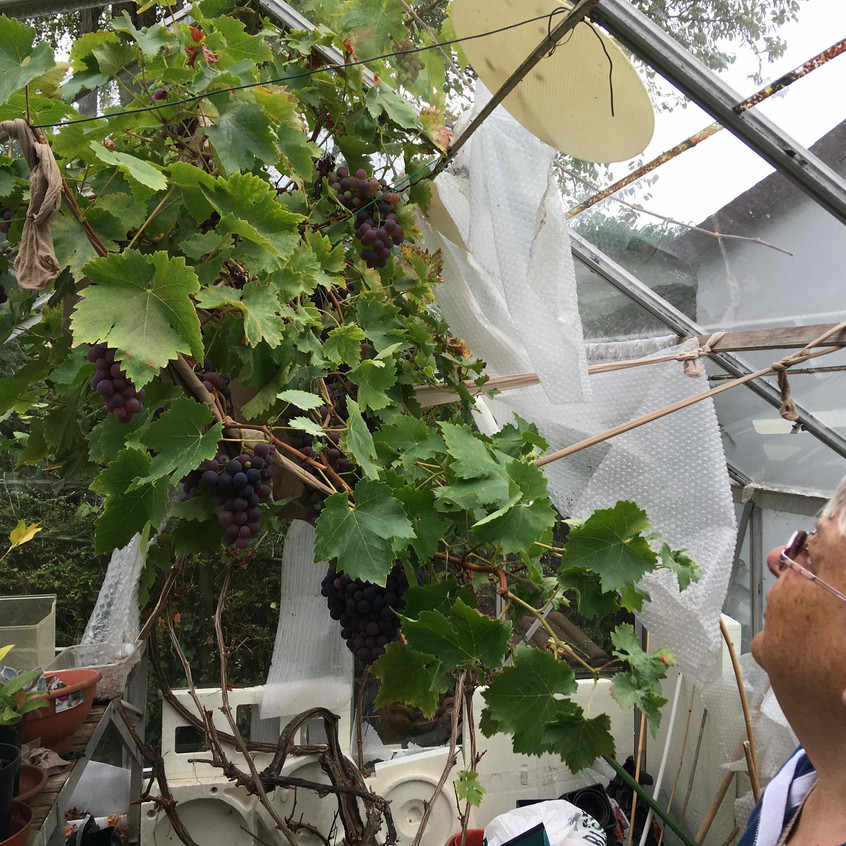 In the greenhouse with Ronnie