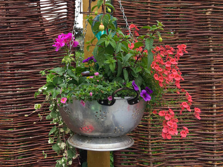 What sort of containers can I grow plants in?