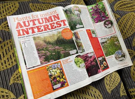 Plants for Instant Autumn Interest