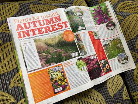 Plants for Instant Autumn Interest
