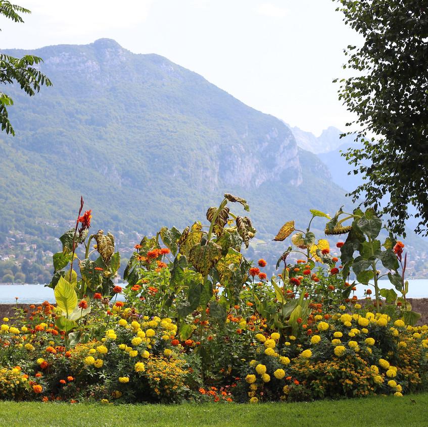 Lakeside vivid lemon border