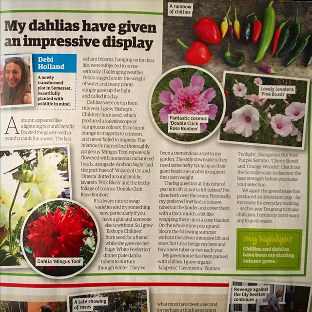 'My dahlias have given an impressive display'