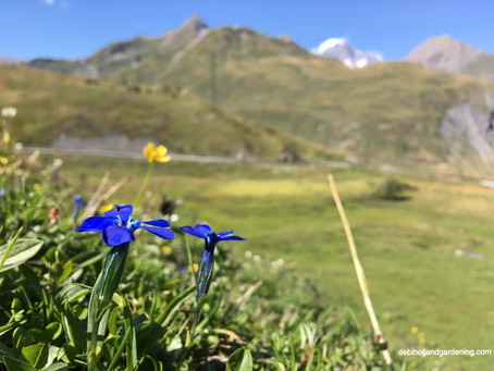 Wildflowers of the Alps