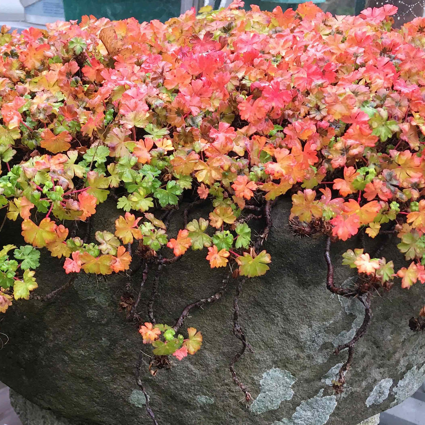 Autumn embers - smouldering colours