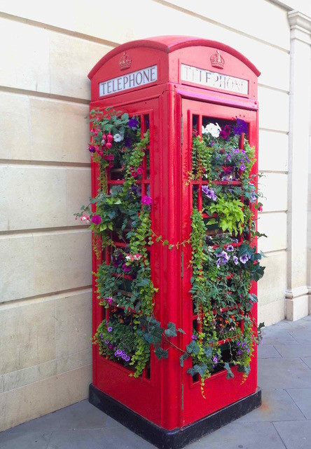 Fabulous flora telephone box display