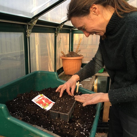 Me sowing seed in the greenhouse