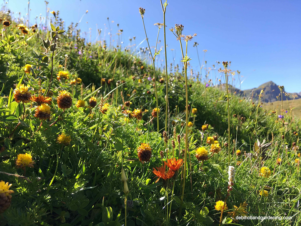 Mountainside teaming with wildflowers