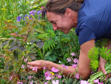 Garden News Magazine Our Garden Renovation