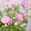 Thumbnail: Daisee Plantable Greeting Card