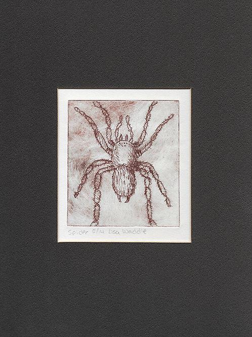 Spider--Matted 8x10
