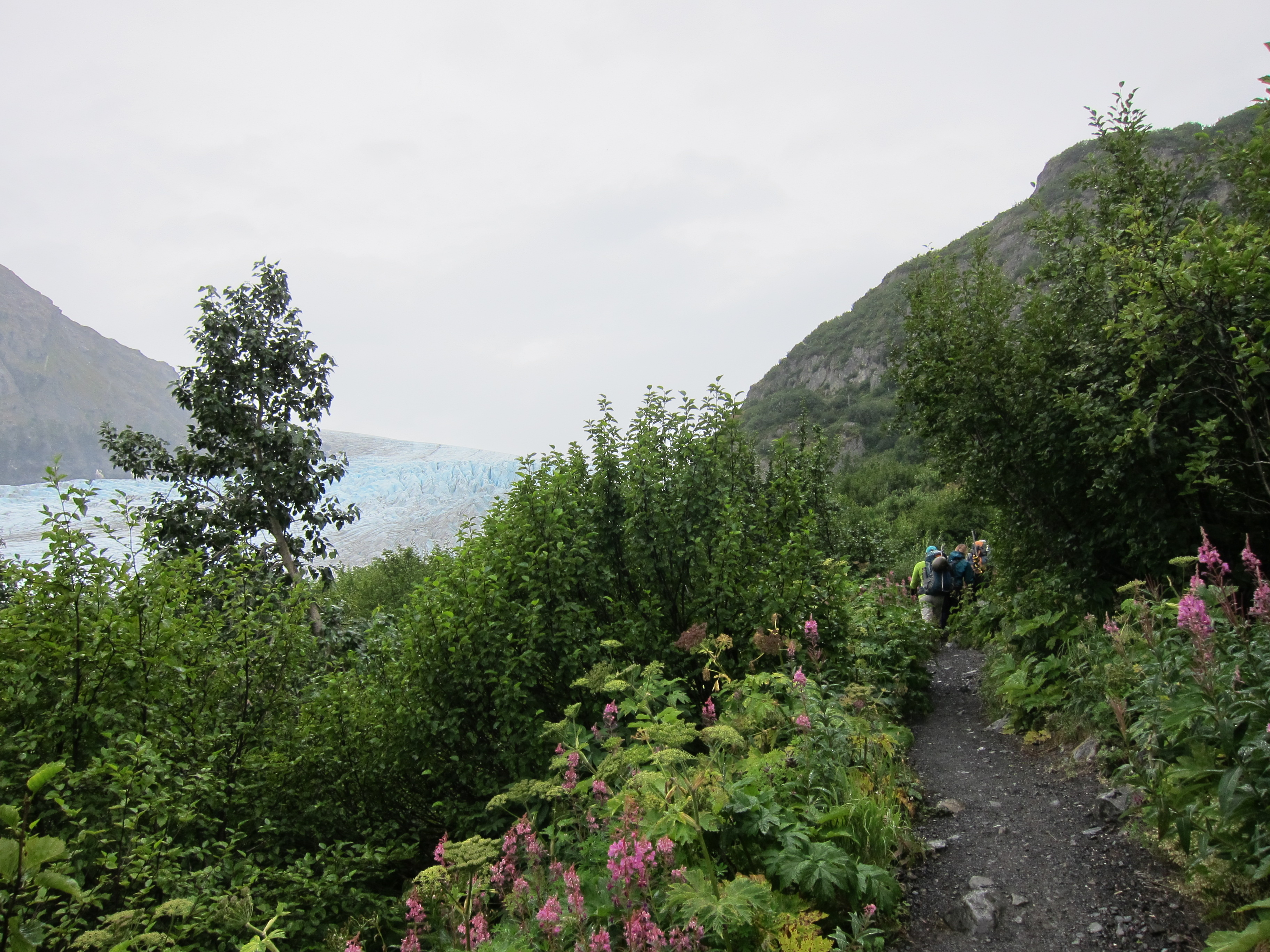 Hiking Trail Kenai Fjords National Park at Exit Glacier