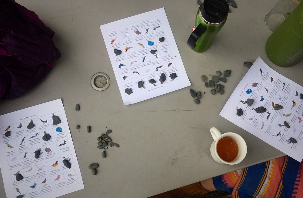 Kenai Peninsula Bird Bingo lesson for Adventure 60 North Kayak Guides