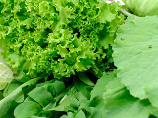Greater Intake of Green Leafy Vegetables and Nitrates = Less Risk of Open-Angle Glaucoma