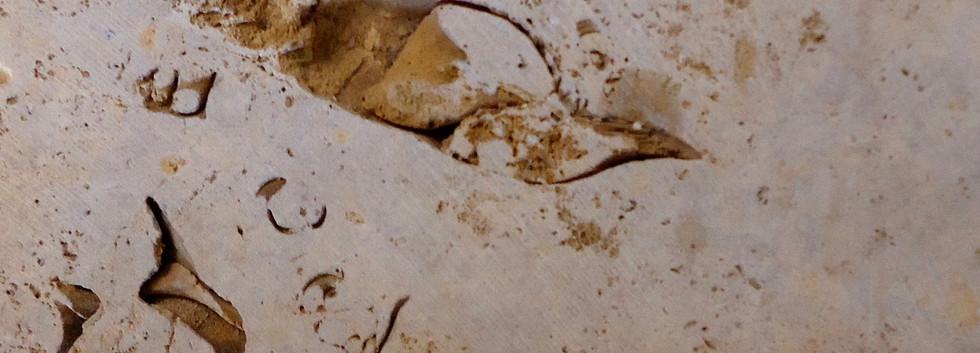 Galena Fossils
