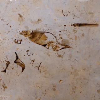 Fossils (seasonal - the seasons being tens of millions of years long)