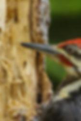 ph_Des_animaux_et_des_arbres_03.jpg