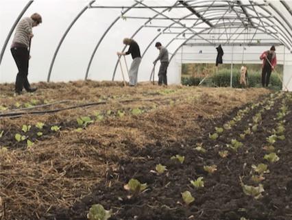 Lokale Ernährungssysteme wie hier ein Solidarisches Landwirtschafts-Projekt, könnten auch in Rickenbach funktionieren. Was es dazu braucht haben wir an unserem Online-Workshop am 20.01. mit 3 spannenden Gästen aus dem regionalen Netzwerk und lokalen Bauern diskutiert.