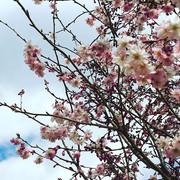 spring aesthetics.jpg