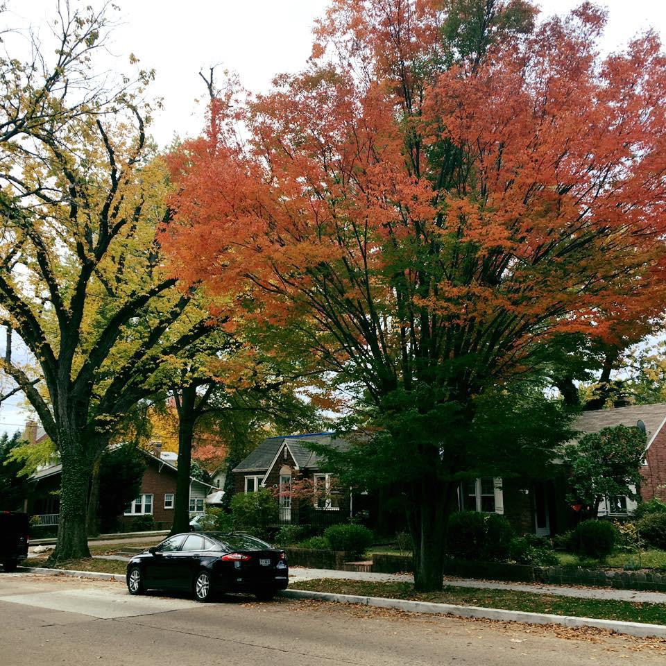 Manor Park FB Page_03.jpg
