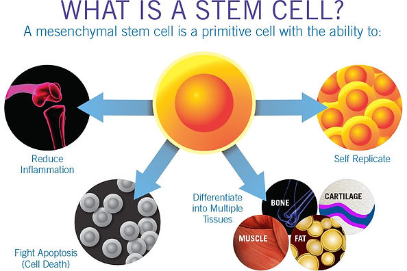 Manhattan Internal Medicine Associates' explanatin of what a stem cell is.