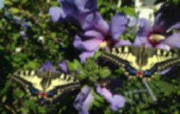 Metamorphose Struhs, Hinwil, alternative Behandlung, Selbstheilung