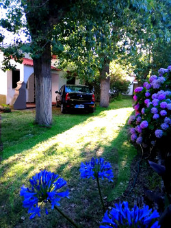 medanos flor azul