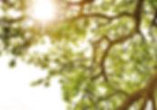 albero_psico_sostegno.jpg