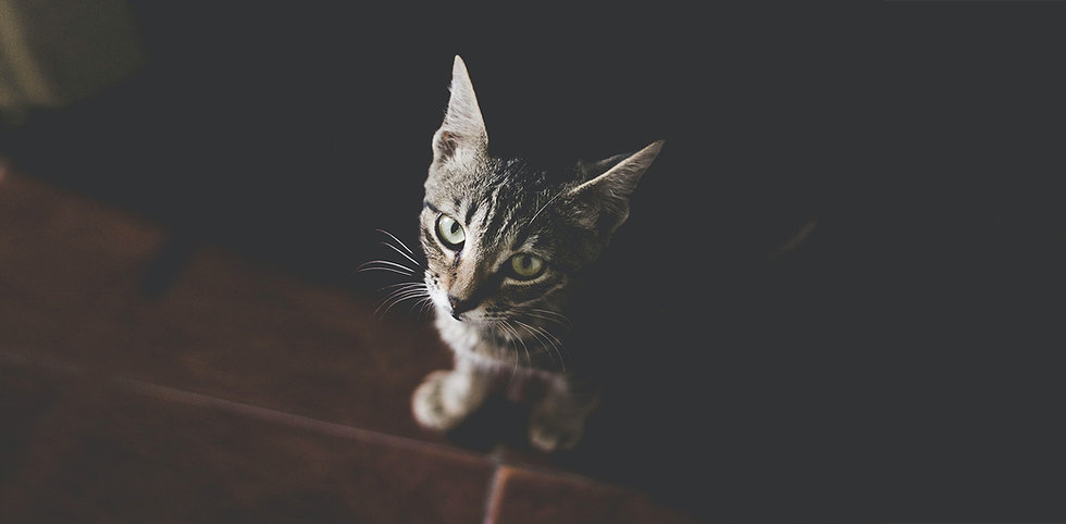 kat2.jpg