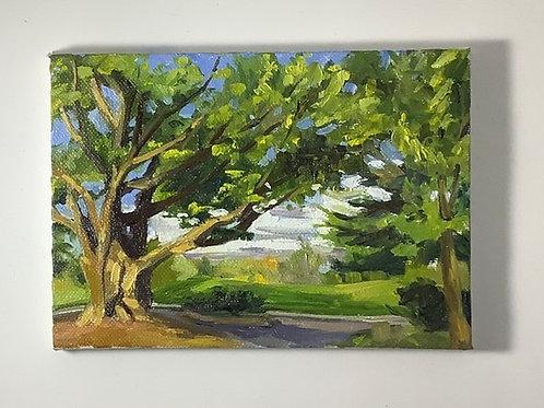 New England Tree