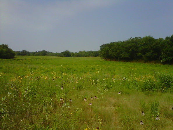 Native Prairie/Savannah Restoration: Renewed Beauty & Ecological Function!